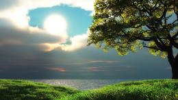 HD Tree Background Wallpapers Free Green Trees Photos Photography 1163