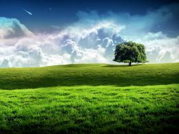 tree wallpaper hd 754