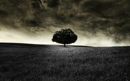Download: Black Tree HD Wallpaper 1595