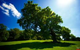 Beautiful Big Green Tree HD Wallpaper | E Entertainment 701