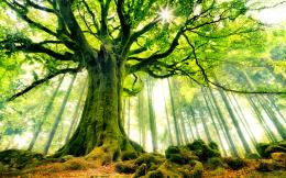Beautiful Strange Tree HD Wallpapers 1164