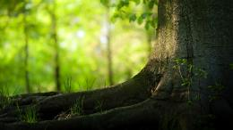 Nature Tree hd Desktop Backgrounds 1103