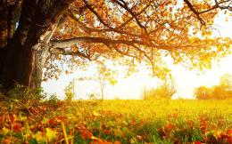 autumn tree landscape autumn tree widescreen high definition wallpaper 883