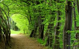 Fashion Forest Trees Nature Hd Wallpaper with 2560x1600 Resolution 1873