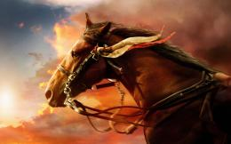 War Horse Movie Wallpaper in HDNew HD Wallpapers 1153