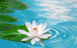 Waterlily Flowers HD Wallpapers Water Lily Flowers HD Wallpapers 471