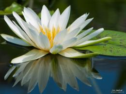water lily Beautiful flowers HD wallpaper 1222
