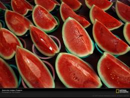 Watermelon Wallpaper 1123