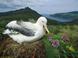 Download White Duck Wallpaper 731