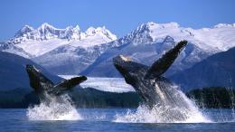 Here are five things you should definitely do Alaska: 1380