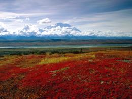 Brilliant Colors of Denali National Park, Alaska 671