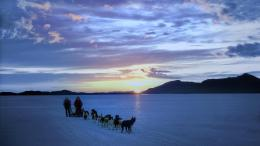 Alaska dog sledding wallpaper 1920x1080 111