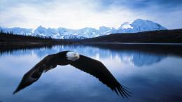 Alaska HD Wallpapers 1195