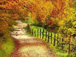 Tag: Beautiful Autumn Scenery Wallpapers,Backgrounds, Photos, Images 723