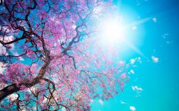 Free Scenery WallpaperIncludes the Scene of Blooming Spring, Simply 455