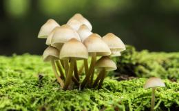 Mushrooms Wallpaper 133