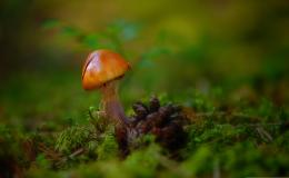 Mushrooms HD Wallpapers 1966