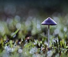 Mushrooms Hd Image Puzzle 1524