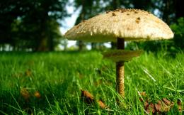 Mushroom Hd Wallpapers Free Download 647