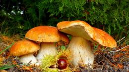 mushrooms hd wallpaper 247