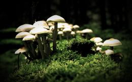 Mushrooms HD Wallpapers 393