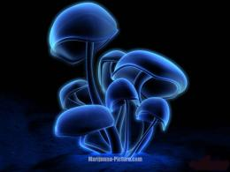 WALLPAPERmushrooms 1058