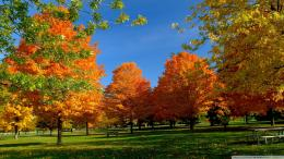 Orange Fall Trees Wallpaper 1920x1080 Orange, Fall, Trees 1487