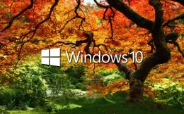 Windows 10 on the orange tree wallpaperComputer wallpapers#47112 494