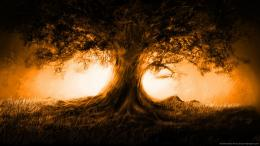 Download 1366x768 Tree and an orange highlight wallpaper 442