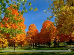 Orange Autumn Tree Wallpaper 1388