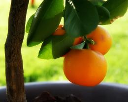 Download high quality 1280 x 1024 Little orange tree Wallpaper 1073