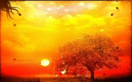 Orange Tree & Yellow Sky Hintergrundbilder | Orange Tree & Yellow Sky 320