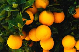 fruit wallpaper20 502
