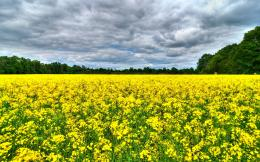 Summer flowers field Wallpapers Pictures Photos Images 487