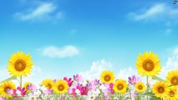 Summer flowers wallpaper 1950