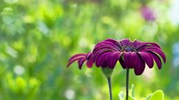 PURPLE FLOWER SUMMER Desktop Background | Desktop Backgrounds HQ 1072