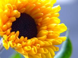 Summer Flower desktop wallpaper 791