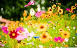 Summer flowers wallpaper and make this Summer flowers wallpaper for 1335