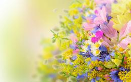 Many summer flowers Wallpapers Pictures Photos Images 553