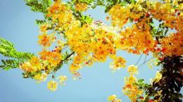 Summer flowers wallpaper and make this Summer flowers wallpaper for 651