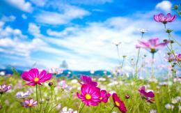 Pink Flowers Summer Wallpapers Pictures Photos Images 1243