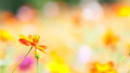 Summer Flowers | Wallpapers Design 1585