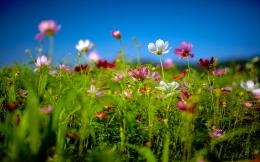Flower field summer Wallpapers Pictures Photos Images 707