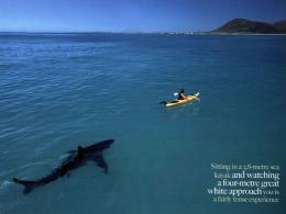 Kayaking In South Africanature wallpaper featuring beaches and 677