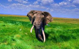 Tag: African Elephant Wallpapers, Backgrounds, Photos, Images and 456