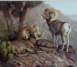 Bighorn Sheep HD Wallpapers 1727