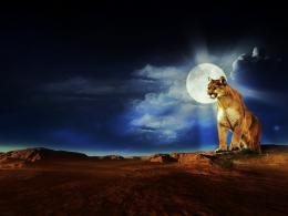Jumping Puma Cougars Mountain Lions Wallpaper the Cougar HD Wallpaper 1435