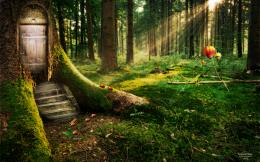 Enchanted Forest Wallpapers | HD Wallpapers 1621
