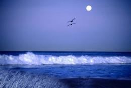 Moon Sea HD Wallpapers 286