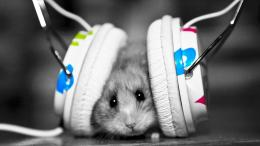 Mouse with Headphones HD Wallpaper » FullHDWppFull HD Wallpapers 888